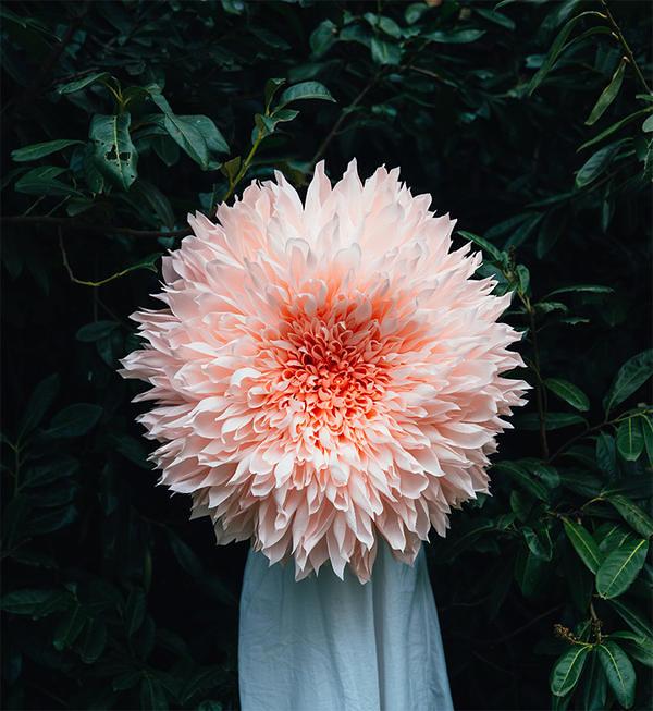 超盛开花朵!九十公分宽手工大纸花