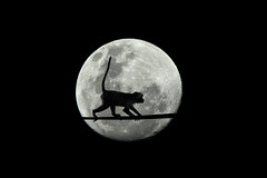 Monkey in the moon photo by J-C-M