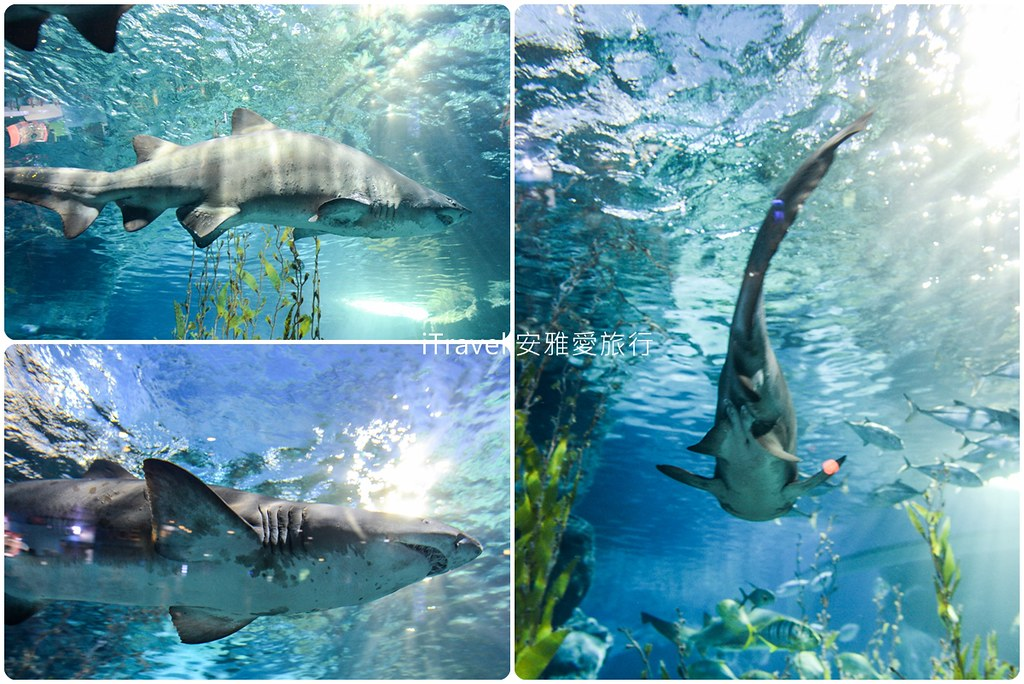 Siam Ocean World Bangkok 41
