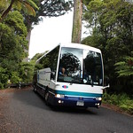Magnificent Kauri - Bus 124