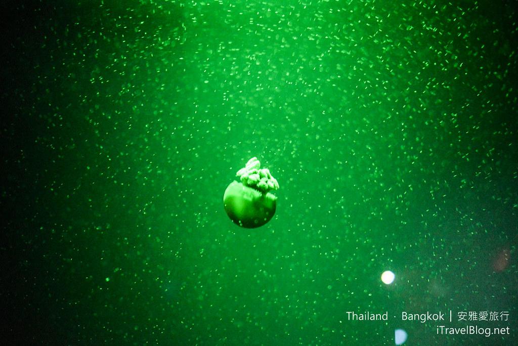 Siam Ocean World Bangkok 55