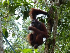 Malaisie - Sarawak