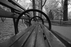 Central Park Benches photo by Richard Micco