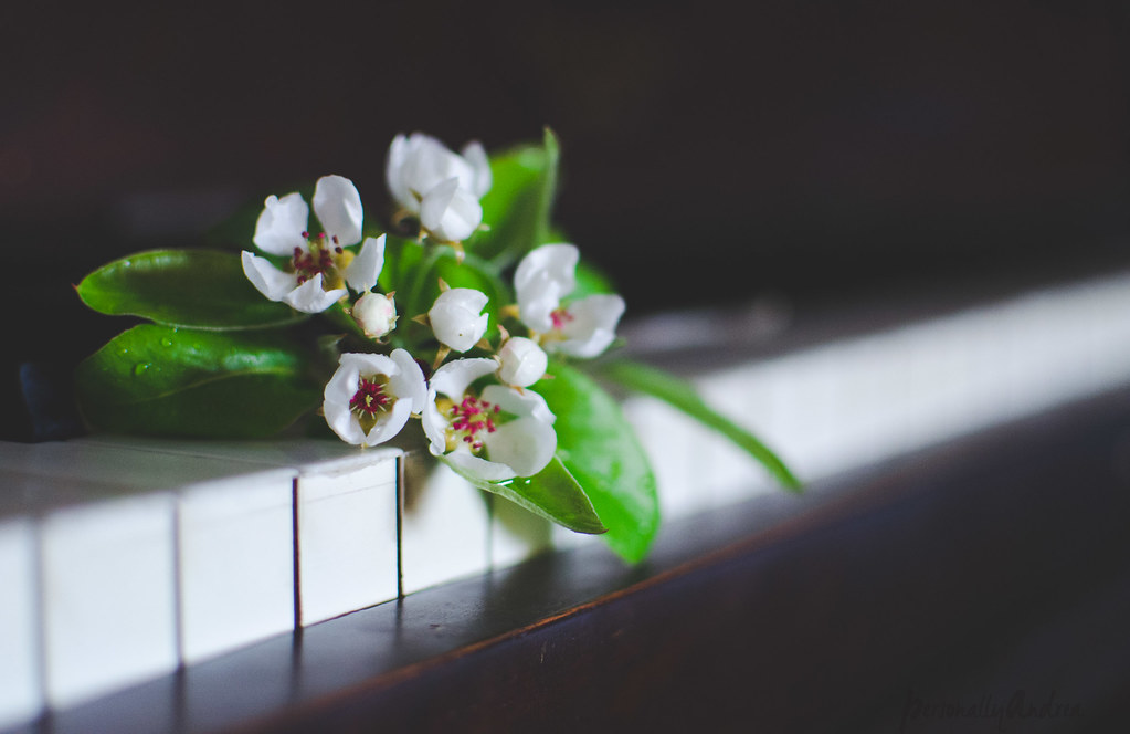 Pear Blossoms & Keyboard | Photofinish | personallyandrea.com