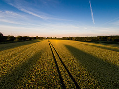 Evening Sun Over Rapeseed, York - Explored 05/07/14 photo by mark_mullen
