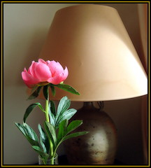 Still Life photo by Pifou 2010