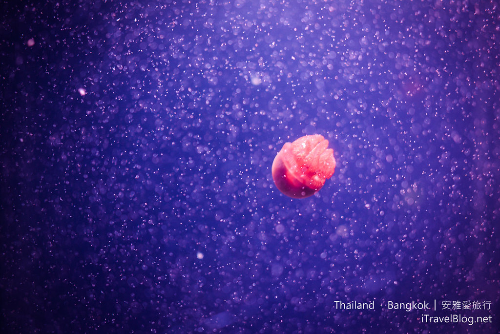 Siam Ocean World Bangkok 56