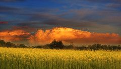 IMG_5015 The orange cloud photo by pinktigger