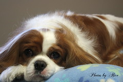 The Look Of Love photo by akgregory26