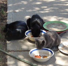 Three strays, at brunch photo by Hairlover