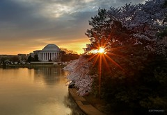 Cherry Blossom Sunrise photo by Scott Fracasso Photography