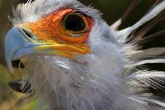Secretary Bird_edited-1 photo by Exdeltalady