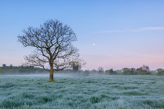 Frosty Morning photo by jactoll