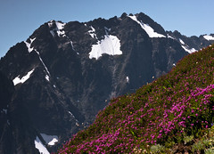 Mountain Heather photo by Crest Pictures
