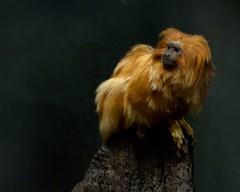 Toronto Zoo - April 10/14 - Explore May 20/14 photo by MorboKat