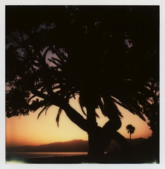 'Roid Week Sunset photo by tobysx70