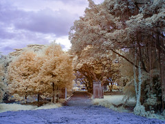 Once upon a time (Infrared) photo by yanwym