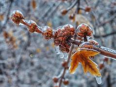 Ice cover (Toronto, Canada. Gustavo Thomas © 2014) photo by Gustavo Thomas