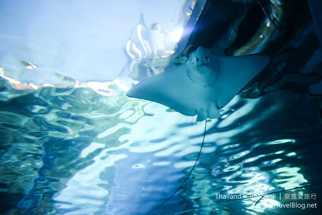 Siam Ocean World Bangkok 47