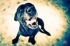 LOMO Astor photo by Joan Díaz