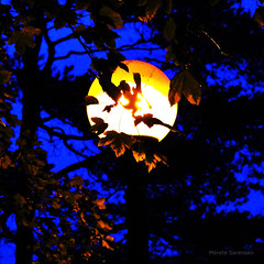 A Private Moon photo by eterem