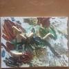 15409768056_1ce14bb26e_t