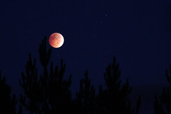 Blood Moon Eclipse photo by Glen in Franklin County