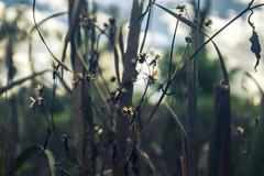 marsh edge photo by amy buxton