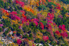 Fall comes to Cadillac Mountain and to Bar Harbor Maine photo by 114berg