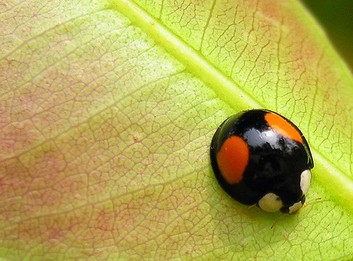 Its beautiful though and if I could have a tattoo, I'd have one of a ladybug