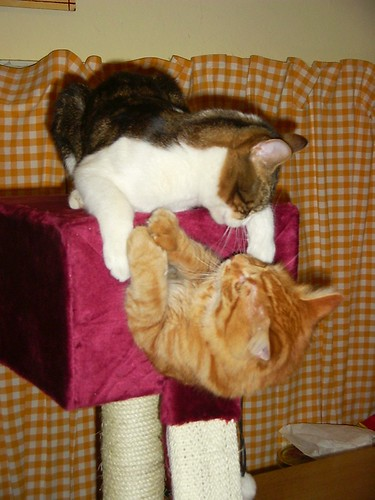 Kijk die katten eens lief spelen!