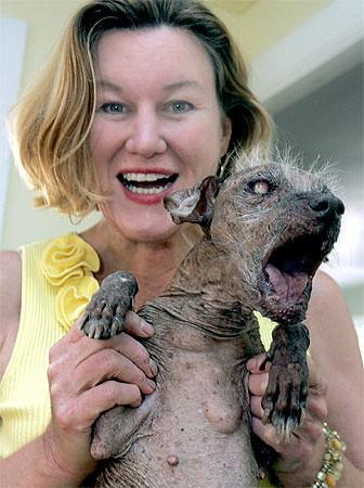 el perro más feo del mundo | perros