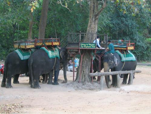Angkor Thom Elephants