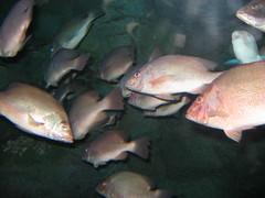Aquaria 032