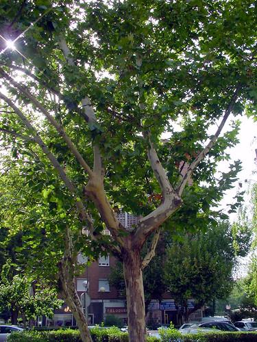 Tree 12 of 22
