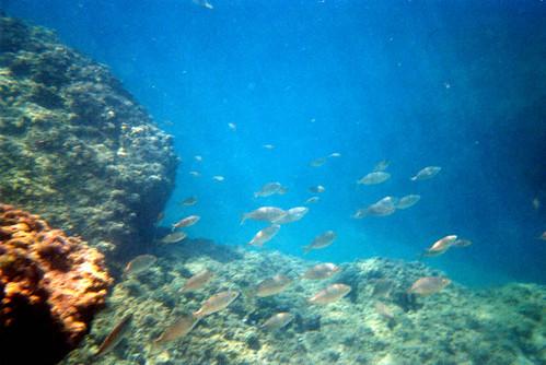 Fotos submarina en Sa Palomera