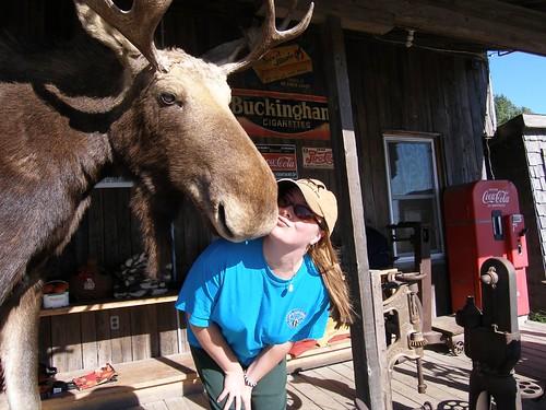 Friendly Moose