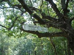 Old Sign at Cemetery, LaGrange College, Leighton AL