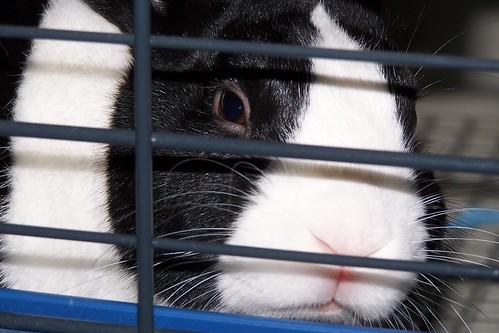 rabbit 003