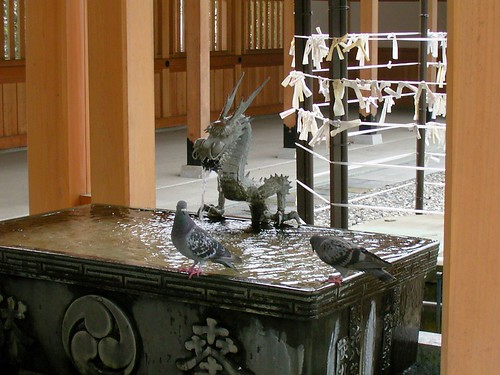 Pigeon and Dragon.