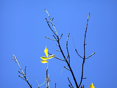 Four Yellow leaves