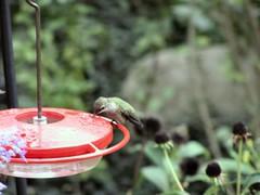 HummingbirdFeeder3