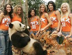 猥褻的熊貓
