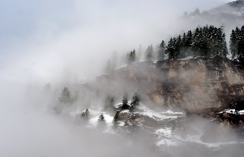 misty mountain trees