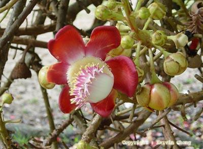 Bloom02
