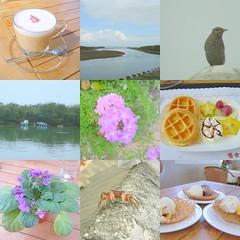 金山賞鳥下午茶一日遊照片集錦