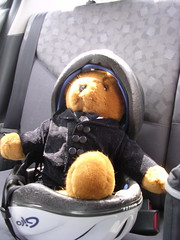 Groombear safe in the back seat