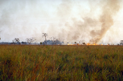 forest fire by Jon Hornbuckle