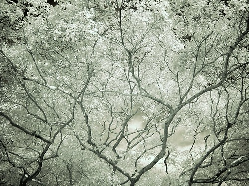 Tree Veins 3