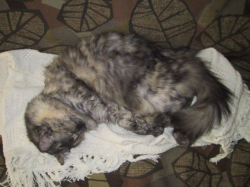 Lorax napping
